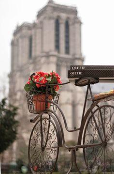 bicycles, paris, bike, flower pots, notr dame, travel, place, flowers, cream
