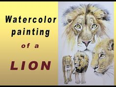 Lion in watercolour video Watercolor Video, Watercolour, Watercolor Paintings, Lion, African, Illustration, Artwork, Animals, Instagram