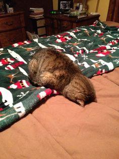 Friend's cat is tired of festivities - Imgur