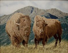 Wyoming Buffalo by Larry Riley Oil ~ 16 x 20