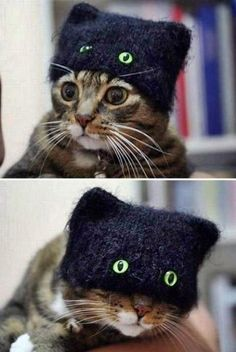gato con gorro de gato