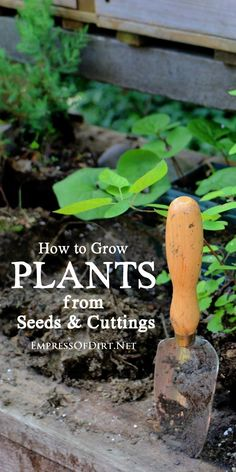 How to grow plants from seeds and cuttings. Also known as propagation, the methods shown here are suitable for beginner gardeners. See how to create new plants from existing ones without spending a dime!