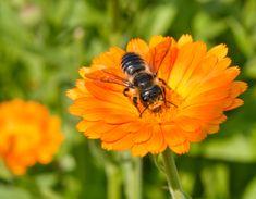 21 espécies de plantas que ajudam a salvar as abelhas