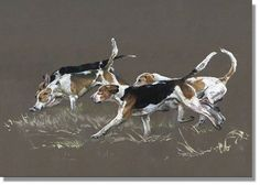 These four hounds; Grimston, Builder, Buckshot & Buckthorn; from The York & Ainsty North were the perfect models for the action painting I was itching to do. http://www.atlasart.co.uk/equestrian-prints/free_running-hunting-hounds-art-print.html (image protected by digimarc)