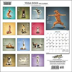Yoga Dogs - I gave this as a Christmas gift and we still laugh at the pictures!