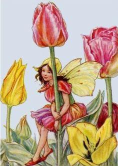 Tulip fairy.