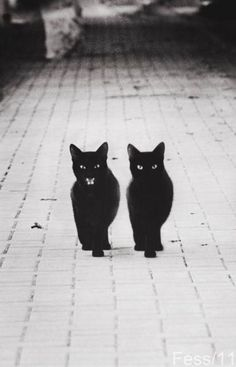 black cat twins ...'tell meow about it'