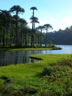 Parque Nacional Huerquehue,Región de la Araucanía/Chile GTSA_SA