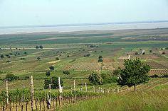 neusiedlersee Vineyard, Travel, Outdoor, Outdoors, Viajes, Vine Yard, Destinations, Vineyard Vines, Traveling