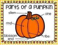 Pumpkin Activities First Grade - Pumpkin Time - Ship Shape First Grade - Parts of a Pumpkin