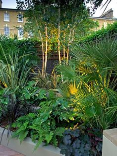 Mylandscapes Garden Design - all year round modern planting scheme ideas You are in the right place about courtyard garden Here - Small Tropical Gardens, Tropical Garden Design, Tropical Backyard, Small Backyard Gardens, Modern Garden Design, Contemporary Garden, Small Gardens, Landscape Design, Small Jungle Garden Ideas