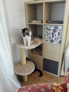 die 20 besten bilder von kratzbaum hunde haustiere und hund katze. Black Bedroom Furniture Sets. Home Design Ideas