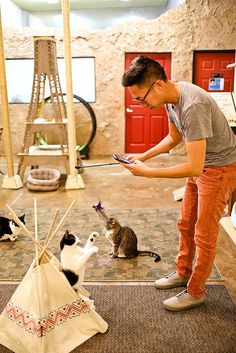 The San Diego Cat Cafe
