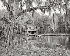 """Volusia County, Florida, circa 1904. """"De Leon Springs near DeLand."""" 8x10 inch dry plate glass negative"""