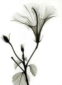 Black  White - X ray Photography © Albert Koetsier -http://www.beyondlight.com/