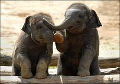 Two buddy elephants