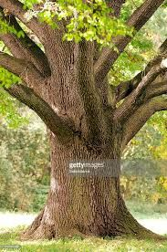 Image result for close up tree