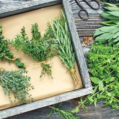 Directory of Culinary and Medicinal Herbs - This is a great resource to bookmark, recipes and articles organized by herb!