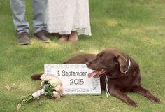 Hochzeit zu zweit - eine Hochzeitsreportage der besonderen Art: Das Paar, ein Hund und die Fotografen, und der Hochzeitstag ist perfekt.