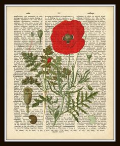 Vintage Dictionary Digital Art Red Poppy Botanical Plate