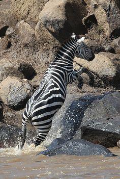 *Crossing Masai Mara, Kenya