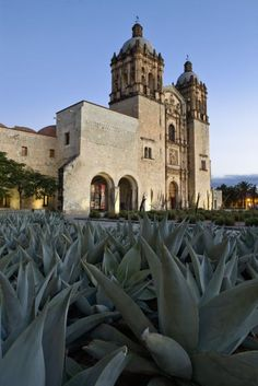 The mezcal route on Ciudad de Oaxaca, Oaxaca #Mexico #Mezcal #Oaxaca #VisitMexico #Gastronomy