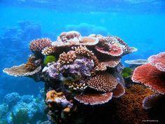#Giardinaggio, da oggi un aiuto anche per la barriera corallina
