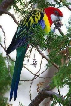 beautifully-colored parrot