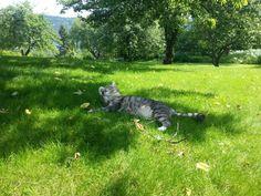 Perfect summersday for our cat, Osiris Nice, Cats, Animals, Gatos, Animales, Animaux, Animal, Cat, Animais