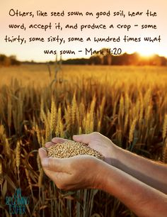 Mark 4:20, The parable of the sower Parables Of Jesus, John 14 6, Mark 4, Daily Word, Bible Verses, Scriptures, Hiding Places, He Loves Me, Good Things