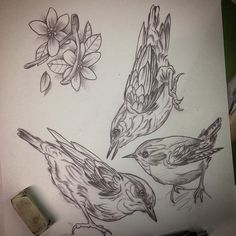 Couple Nuthatch and a Wren. Forever practicing buuuurds.  Space this weekend for tattoos, get in touch peoples ✌️