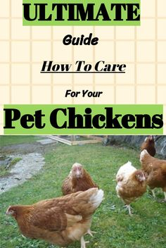 Chickens are wonderful, comical creatures that have been domesticated for thousands of years. Different Breeds Of Chickens, Types Of Chickens, Pet Chickens, Raising Chickens, Chickens Backyard, Chicken Quotes, Raising Farm Animals, Best Egg Laying Chickens, Chicken Breeds