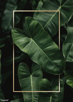 Golden frame on a tropical background Tropical Wallpaper, Green Wallpaper, Mobile Wallpaper, Backgrounds Free, Wallpaper Backgrounds, Iphone Wallpaper, Tropical Frames, Tropical Background, Framed Wallpaper