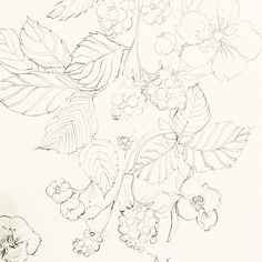 Blackberries. I love drawing blackberries.  #sketch #illustration #artist #blackberries #onebooktwobooks #pencil #graphite