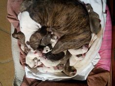 My baby girl puppies