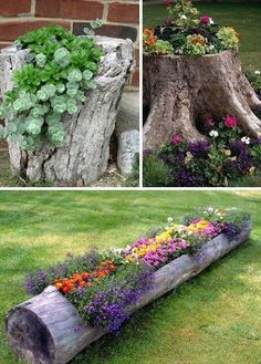 homemade flower bed in tree trunk More