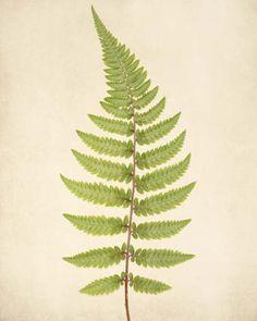 "Fern Art, Botanical Print """"Fern No. 4"""""