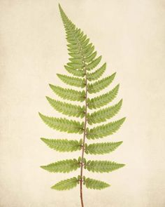 "Fern Art, Botanical Print """"Fern No. 4"""""