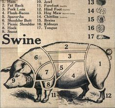 swine butcher chart