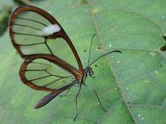 Rare Butterflies - Butterflies Photo (27829081) - Fanpop