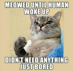 Spoken like a true kitty cat!*