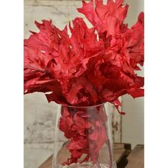 @curiouscountry posted to Instagram: Fall is coming, make sure to pick up some of our Preserved Oak Leaves to decorate your home and events during this beautiful season! Available in many colors, but shown here in vibrant RED! #oakleaves #oak #falldecor #autumn #autumndecor #fall #floraldesign #driedflowers #homedecor #decoration #livingroominspiration #livingroominspo #diyhomedecor #decorating #decorideas #decoratemyspace #naturaldecor #flowertour  #redflowers #red #diycrafts #craftidea #diypro