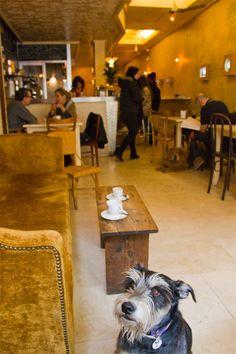 La Piola, un sábado cualquiera: cafés, vinos, ensaladas ricas y dos perros de lo más tranquilos cada uno con su dueño. De lujo.