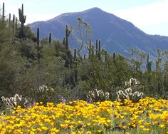 Want to enjoy the wilderness of Arizona?  The Cave Creek recreation area - a desert oasis with mountain views is just minutes from the house.