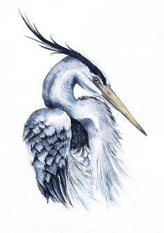 Grey heron portrait II, wildlife, bird, watercolour painting by Karolina Kijak Watercolor Bird, Watercolor Animals, Watercolor Paintings, Bird Drawings, Animal Drawings, Heron Tattoo, Flamingo Art, Bird Wall Art, Blue Heron