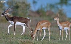 Mahavir Harina Vanasthali National Park is a deer national park located in Vanasthalipuram, Hyderabad, Telangana, India. It is spread over 3,758 acres. It is the largest green lung space in the city of Hyderabad.