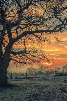 lmmortalgod:Frosty MorningbyInstoonpic