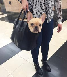 French Bulldog in a Bag❤️