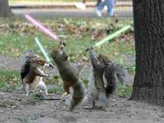 I'd like to see Jedi squirrels; see how Daryl handles that!
