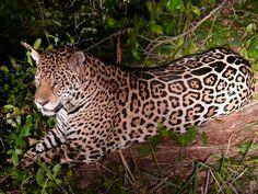 Great Photo~   GEOGRAFIA E CIDADANIA: Pantanal